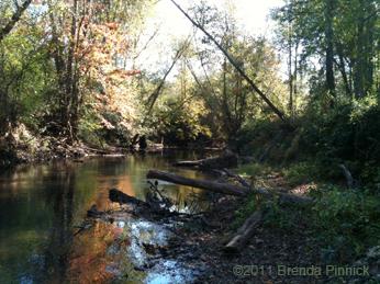 Creek by Brenda Pinnick