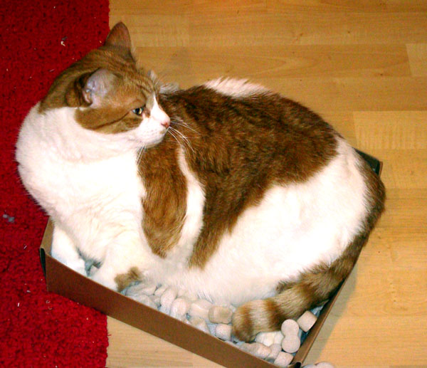 A_box_full_of_nugget
